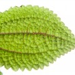 Stockfoto: Plant with green leaves texture