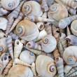 Texture of sea shells — Stock Photo