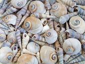 Texture of sea shells — Stock Photo