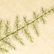 Of decorative grasses — Stock Photo #40769737