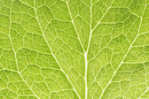 Green leaf as background — Foto Stock