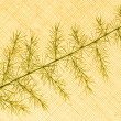 Of decorative grasses — Stock Photo #40771075