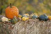 Pumpkins on hay — Stock Photo