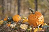 Variety of Pumpkins on hay — Stock Photo