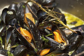Mussels being cooked in buttery sause close-up — Stock Photo