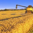 Stock Photo: Harvesting combine in the field