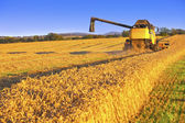 Harvesting combine in the field — Foto Stock