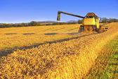 収穫のフィールドの結合 — ストック写真
