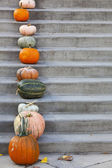 Pumpkins on the concrete stairs — Stock Photo