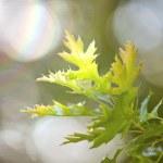 hojas verdes y los rayos del sol — Foto de Stock