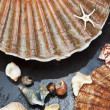 Sea shells background — Stock Photo