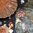 Various seashells on wet stones — Stock Photo #17187657