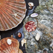 Stock Photo: Various seashells on wet stones