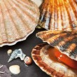 Various seashells on wet stones — Stock Photo #17188379