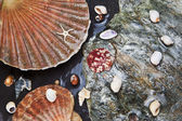 Various seashells on wet stones — Stock Photo