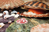 Various seashells on wet stones — Stock Photo