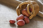Red potatoes scattered from wicker basket — Stock Photo