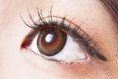 Kobiece oko brązowe soczewki kontaktowe makro — Zdjęcie stockowe