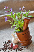 Sage in wooden mortar, garlic, pepper and cloves on sackcloth — Stock Photo