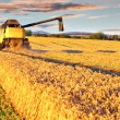 Royalty-Free Stock Photo: Harvesting combine in the wheat field
