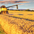 Harvesting combine in the wheat field - Stock Photo
