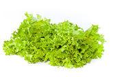 Fresh green salad lettuce — Stock Photo
