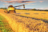 Harvesting combine in the wheat field — Stok fotoğraf