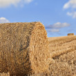Hay bales — Stock Photo #27006495