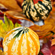 Pumpkins over autumn foliage — Stock Photo