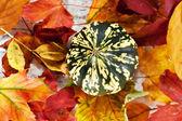 Pumpkin over autumn foliage — Stock Photo