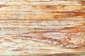 Birch bark — 图库照片