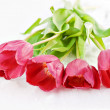 Red tulips on the snow — Stock Photo