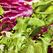 Closeup of mixed salad lettuce — Stock Photo