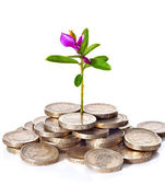 Young sprout with flower grows from a pile of British coins. — Stock Photo