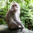 Royalty-Free Stock Photo: Monkey Forest Park