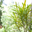 Balinese plants — Stock Photo