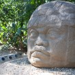 Royalty-Free Stock Photo: Famous olmec head