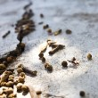 Working ant on the ground — Stock Photo