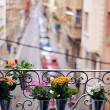 Potted plants on an sill — Stock Photo