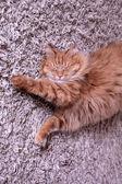 Röd katt sover på en matta — Stockfoto