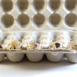 Five quail eggs in a carton box — Stock Photo