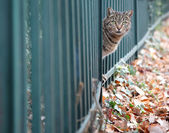 Cat in autumn park, looking over the fence — Stock Photo