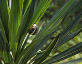 Snail sitting on leaves — Stok fotoğraf