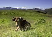 牛山の風景の背景上に置かれて — ストック写真