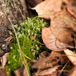 Tree moss on a tree — Stock Photo