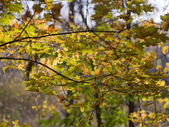 Branch of a tree in the autumn forest — Stock Photo