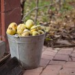 Pail with yellow apples — Stock Photo