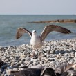Seagull on the beach  — Stock Photo