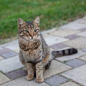 Beautiful gray cat sitting — Stock Photo