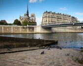 Pigeons on the banks of the Seine in Paris — Stock Photo
